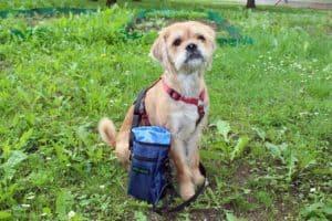 Klasse Futtertasche fürs Hundetraining