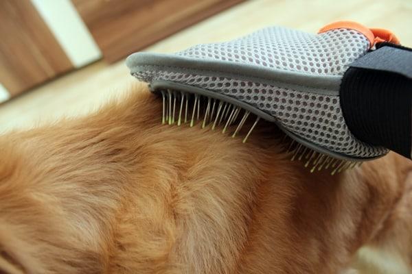 Fellpflege mit Handschuh beim Hund