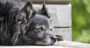 Was Sie bei der Hundefellpflege beachten sollten